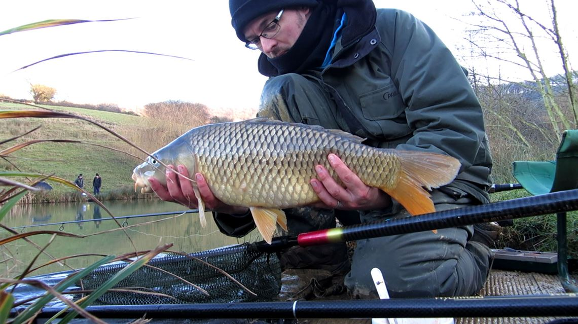 Common carp from Harescombe Fishery