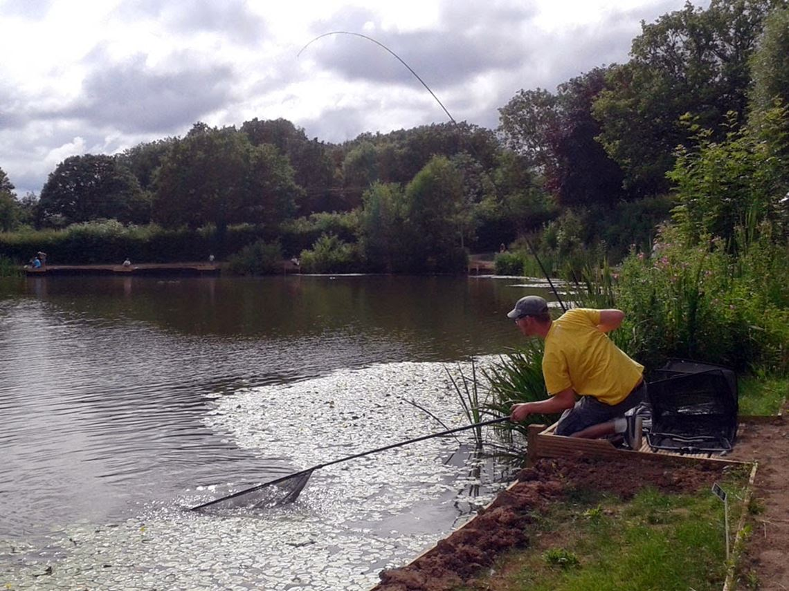 Netting a carp at Bitterwell Lake