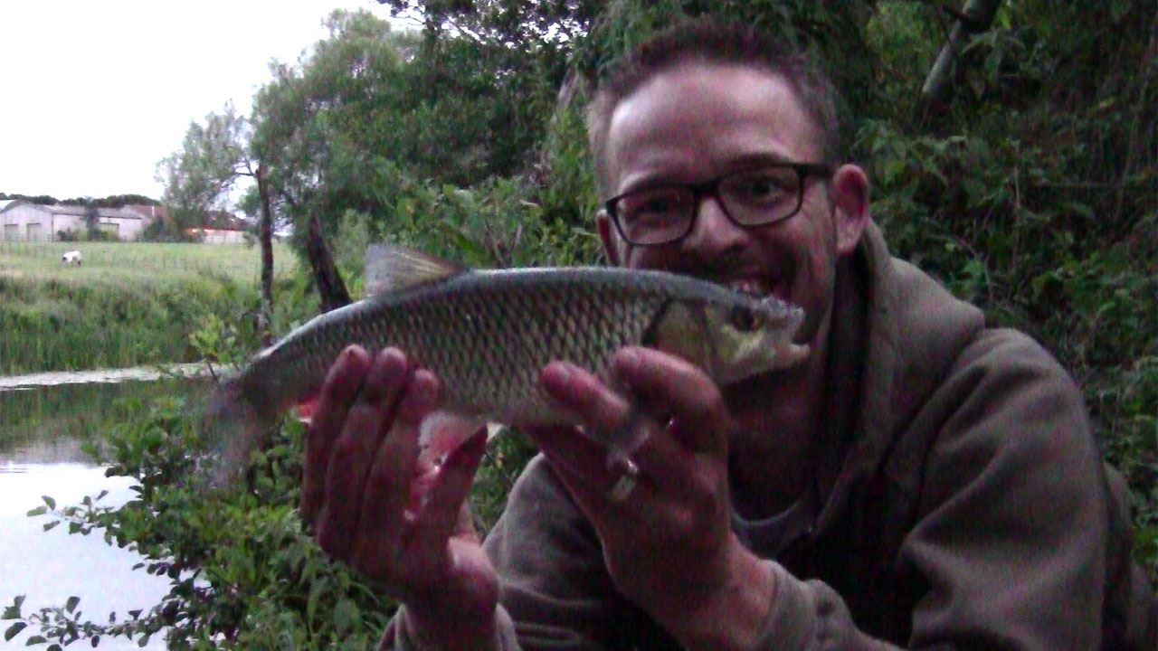 River Avon Chub caught at Swineford