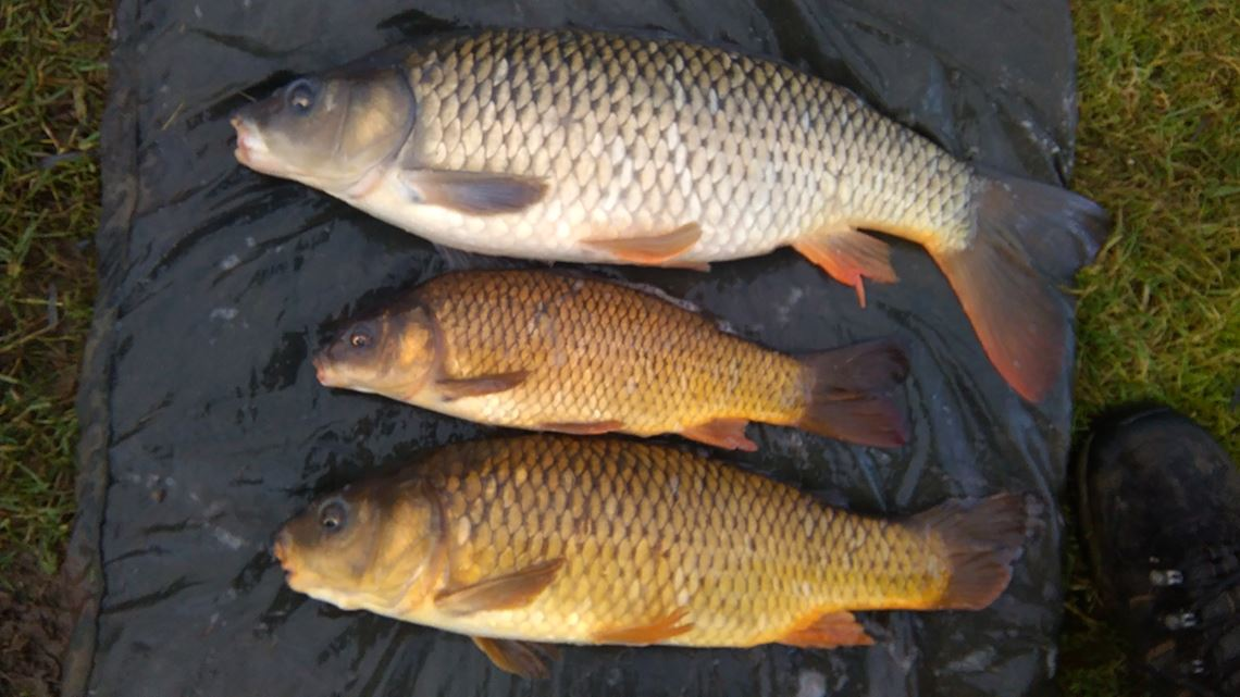 Triple carp run at the Holiday Inn Lake