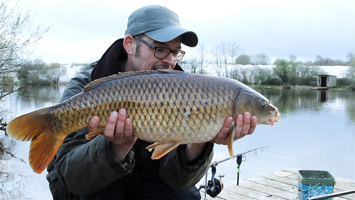 Common Carp caught from Follyfoot Fishery