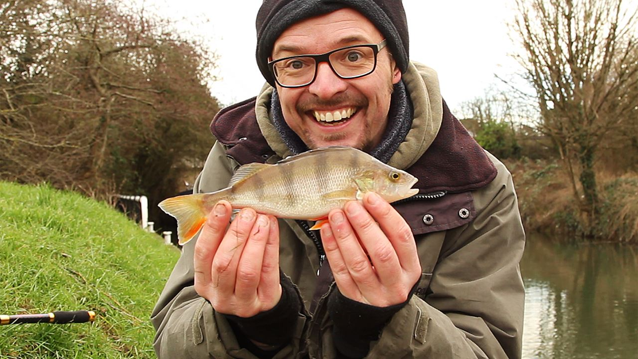 Perch caught on a lure at Keynsham Lock