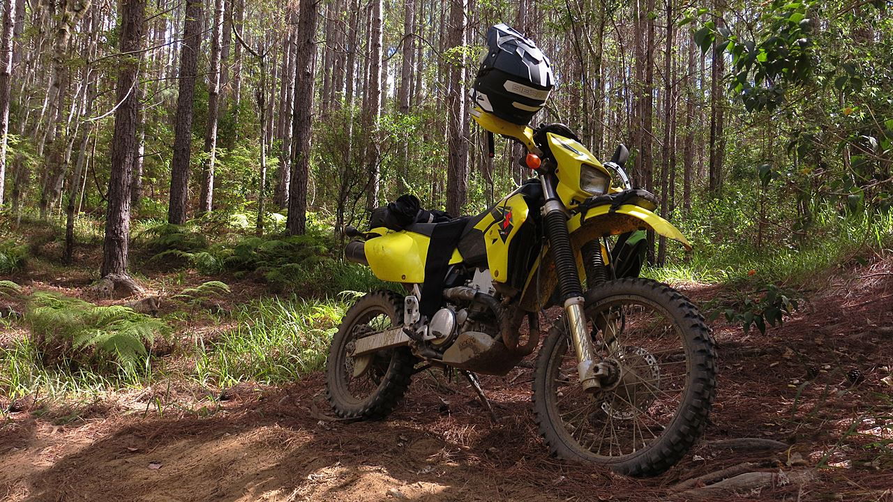 DRZ400 in the bush